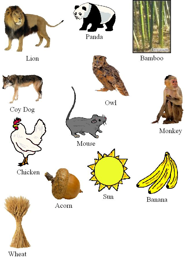 Food Web Pictures (JPEG)